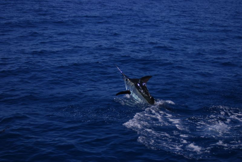 Florida fishing charters, never know what you're going to catch.