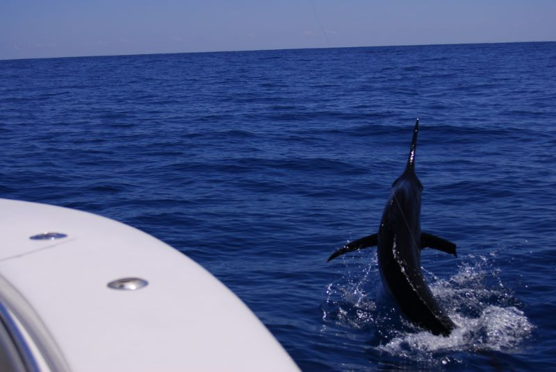 almost on plane trying to keep up with him. a great Stuart Fl. fishing charter