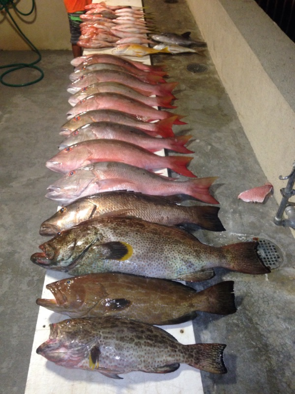 Smacked em on this two boat Bahamas trip.