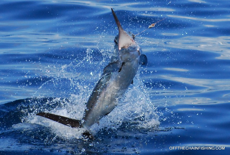 Off the Chain Fishing Charters near Tampa, Orlando, and Palm Beach Florida