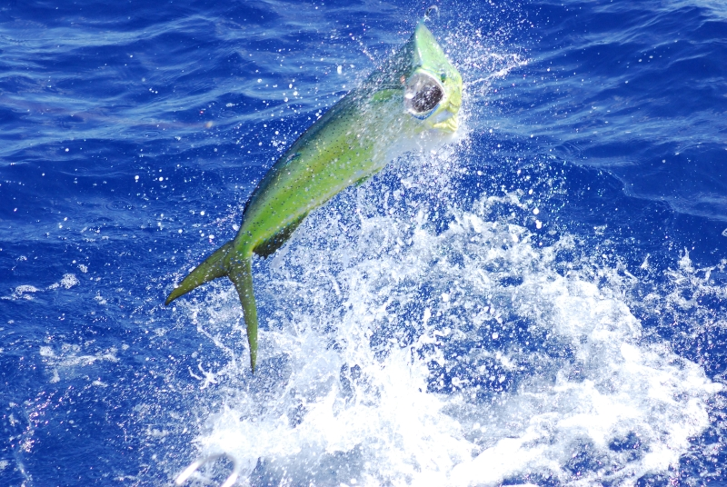 Welcome aboard Off the Chain, Stuart Florida fishing charter boat